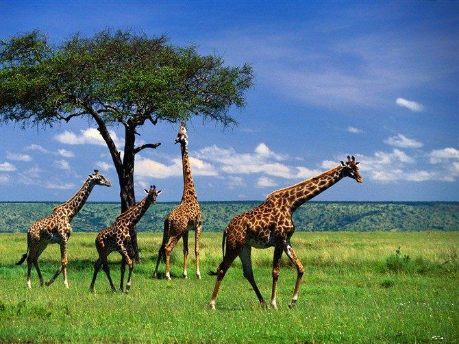 「南非」的圖片搜尋結果